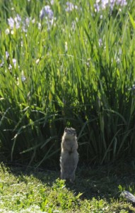 Hello - I'm a Gopher